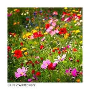 Gen 2 Flowers web 6036