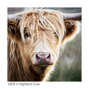 Gen 4 Highland Cow web 0044
