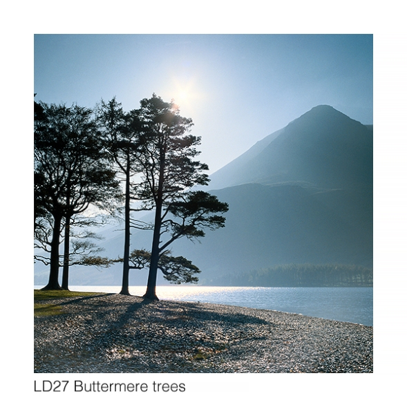 LD27 Buttermere trees GC web
