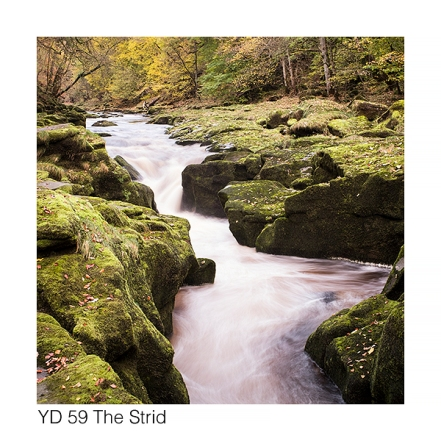 YD59 The Strid autumn GCs web