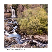 YD60 Thornton Force GCs web