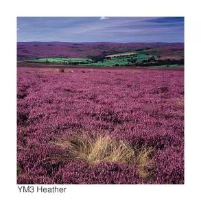 YM3 Heather web
